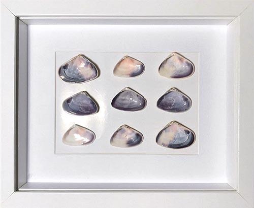 seashells-framed-in-a-white-shadow-box-frame