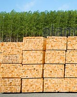 sustainable-plantation-grown-picture-framing-timber